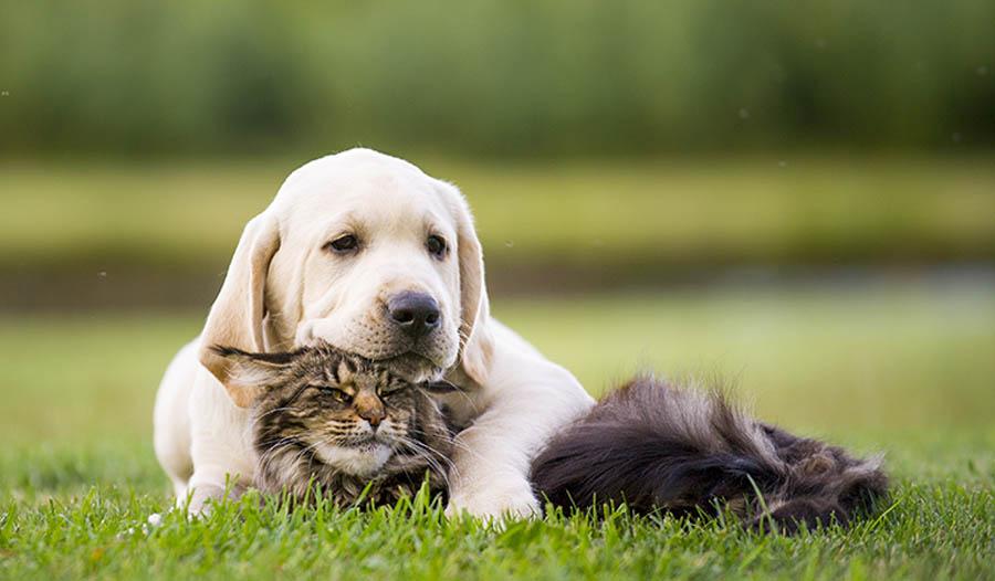 So halten Sie Ihren Hund oder Katze gesund