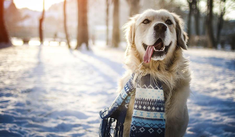 Wintergesundheitstipps für Haustiere
