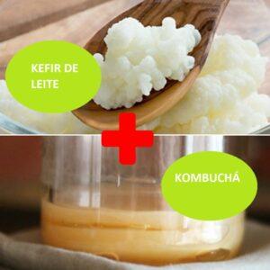 Combo – Kefir de Leite + Kombuchá – com Frete Grátis